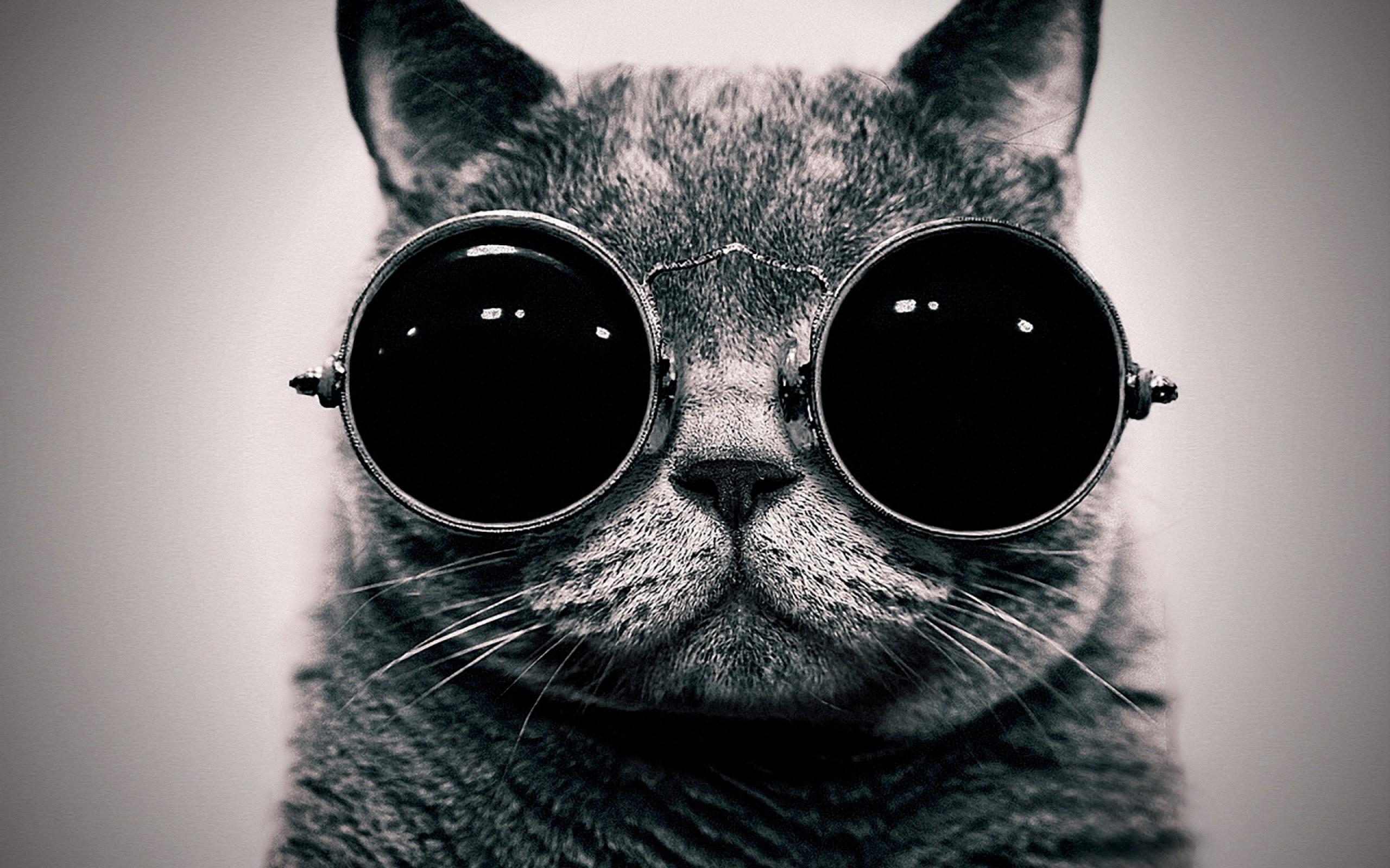 wallpaper-cat-in-the-glasses-2560x1600